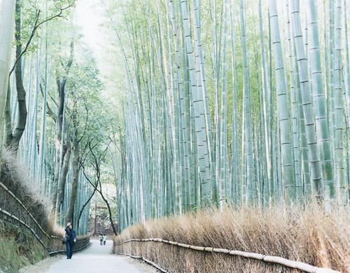 Kyoto Saga Art University