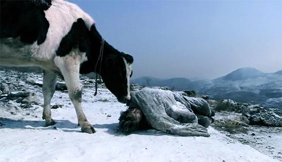 guan-hu-cow-2009-huang-bo